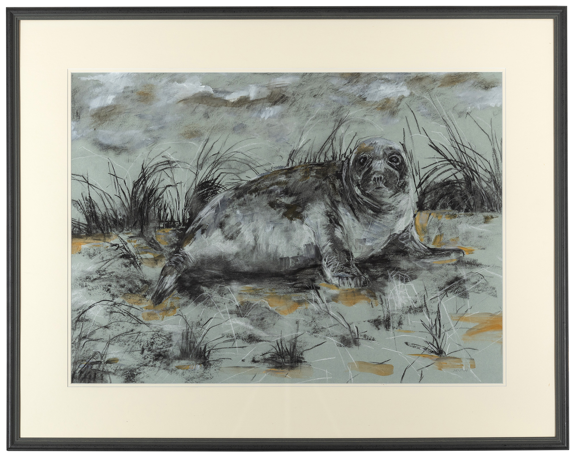 Living Art - Young Seal by Sally Newton