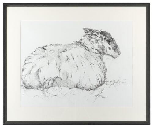 Living Art - Tisbury Sheep by Sally Newton