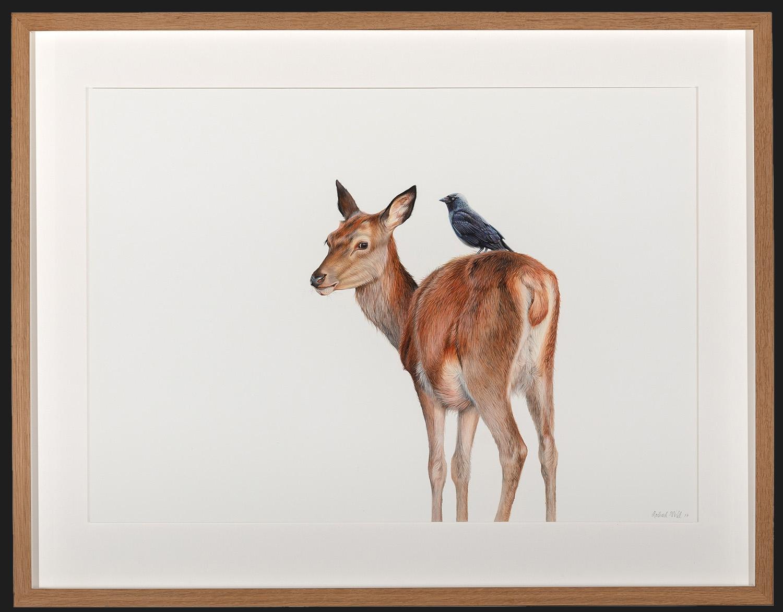 Living Art - Stolen Perch by Rachel Wild