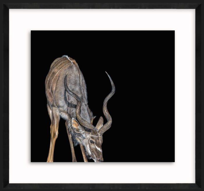 Living Art - Kudu at the watering hole by Rachel Wild